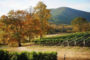 Ava House | Dahlonega, GA | Local Vineyards